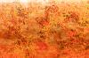 Carta marmorizzata arancione